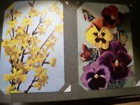 Vintage Postcard Album containing Flower Postcards (unused) J Arthur Dixon etc