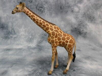 CollectA NIP * Reticulated Giraffe * Wildlife 88534 Replica Model Toy Figurine