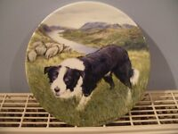 "Bradford Exchange Royal Grafton China 8"" Boarder Collie plate (THE GUARDIAN)"