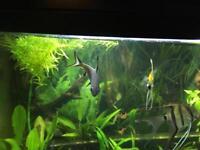Tropical fish tank SOLD