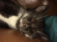 Last playful kitten ready now