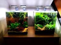 Two 30l planted aquariums, fully established