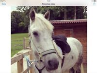 Great 15.1 horse for part/ full loan in Ditchling