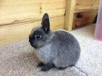 Baby Rabbit girl