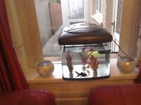 50 litre fish tank with 2 fish.