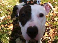 Dog Walker Mary's walkies * Acton, Chiswick, Shepherd Bush, Turnham Green, Ravenscourt Park