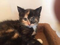Beautiful girl kittens