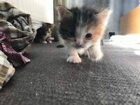 We are giving away 6 georgeous kittens in e few weeks 50£ each
