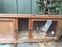 Rabbit and hutch