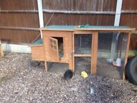 BARGAIN Chicken and Duck Job Lot Set Up