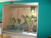Chinese water dragons x 2 female includes vivarium,barks,light etc.