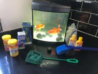 Fish tank, Pump, 3 fish one large, blk rocks, food, water treatments, cleaning items, net etc.,