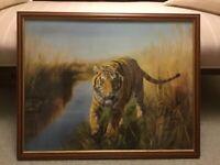 Large Framed Print of a Tiger