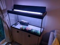 Fluval Roma 200L tank with oak cabinet