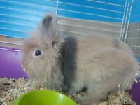 I have for sale 3 small rabbits , 2 one year rabbits