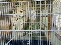 Zebra finches free to good home