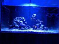3 foot aqua evolution 900 aquarium