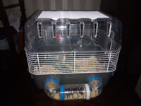 Dwarf Hamster & NEW Cage & Accessories (Russian)