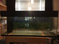 4 foot fish tank good condition, reversible back ground picture, 2 light tubes.