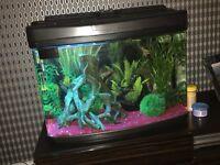 Tropical fresh water fish tank
