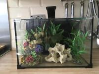 Complete Tropical Fish tank set up