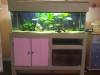4ft fish tank and stand full set up