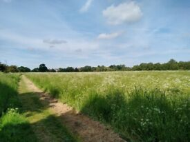 10 Acres to Rent for Secure Dog Exercise, Weddings or Other Use