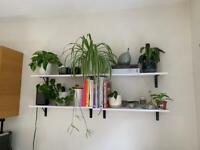 White shelves with black brackets