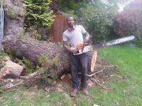 Tree Surgeon/Lanndscape Gardener.Thetreemann