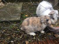 Two bunnies ready for the forever home