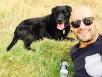Experiences and profesional dog walker