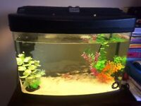 Ful set fish tank with live fishes