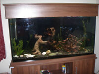 Tropical Fish Tank - complete set-up