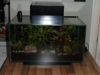 Fluvel Edge 23ltr fish tank, with all acessories