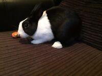 Baby female Rabbit