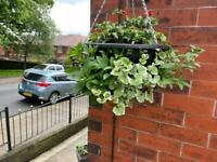 Hanging baskets £20 or 2 for £35