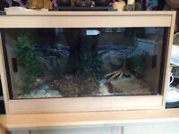 Female corn snake for sale. Full setup included.