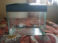 20 litre fish tank and filter