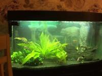 Fish tank juwel 180L Tropical Aquarium