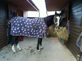 Lovely horse for part loan