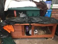 2 rabbits and hutches