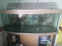 5 ft fishtank and stand