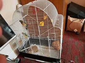 Nice bird pair and cage
