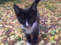Lovley kitten (10 weeks old)