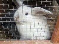 free bunnies