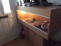 reptile tank/viv and stand