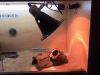 Bearded dragon + vivarium
