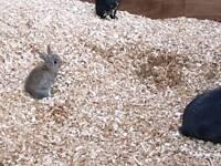 Bunny 1 grey