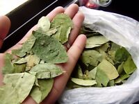 Peruvian Coca leaves and powder, directly from the Andean Mountains of Cuzco Peru.