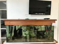 Complete setup with Koi Angel fish and Cory's